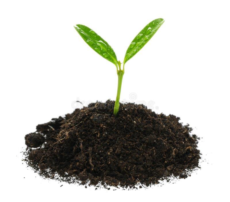 Wachstum des neuen Lebens auf Hintergrund lizenzfreies stockbild