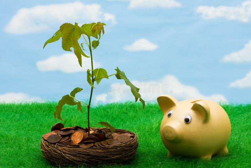 Wachstum in Ihren Sparungen stockfoto