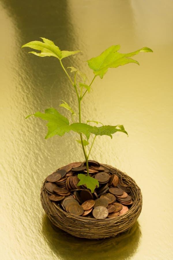 Wachstum in Ihren Sparungen stockfotografie