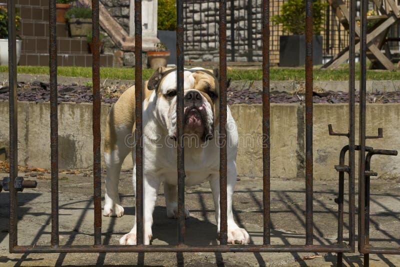 Wacht Dog royalty-vrije stock afbeeldingen