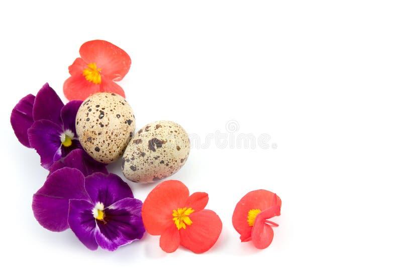 Wachteleier mit Blumen lizenzfreie stockbilder