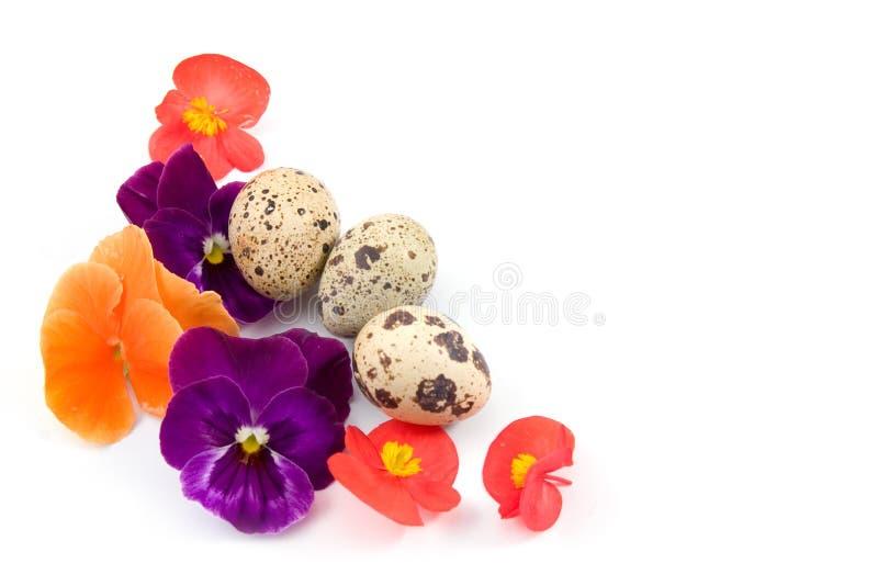 Wachteleier mit Blumen lizenzfreies stockfoto
