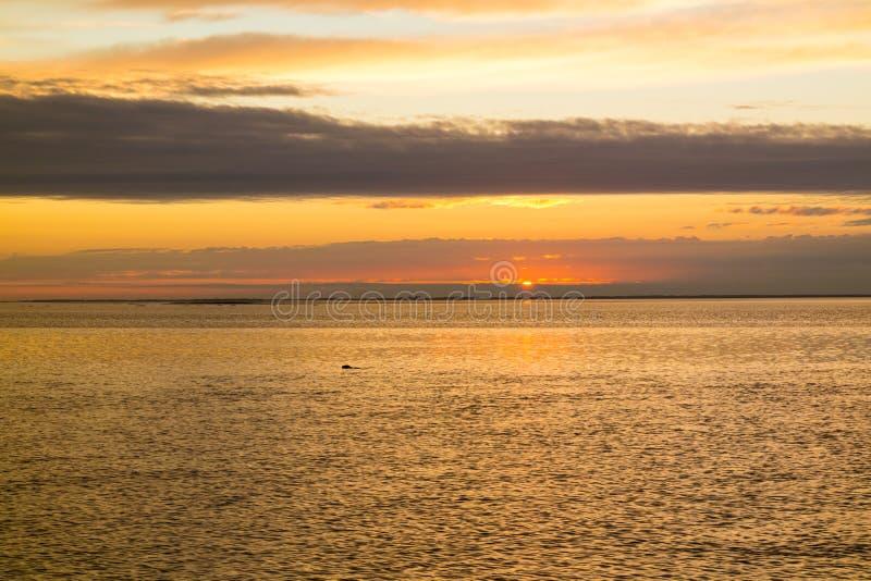 Waddensea avec le littoral de l'île Texel et le joint de natation au su images stock