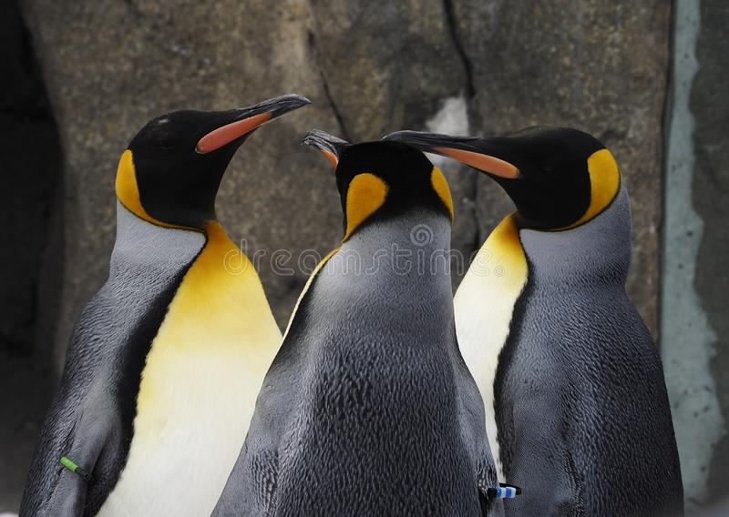 Waddle του αυτοκράτορα Penguins στοκ εικόνα με δικαίωμα ελεύθερης χρήσης