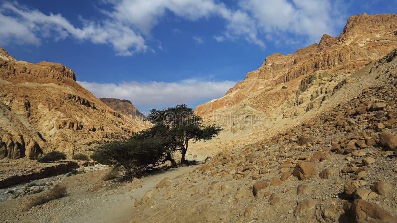 Wadi Arugot i den Ein Gedi naturreserven, Israel arkivbilder