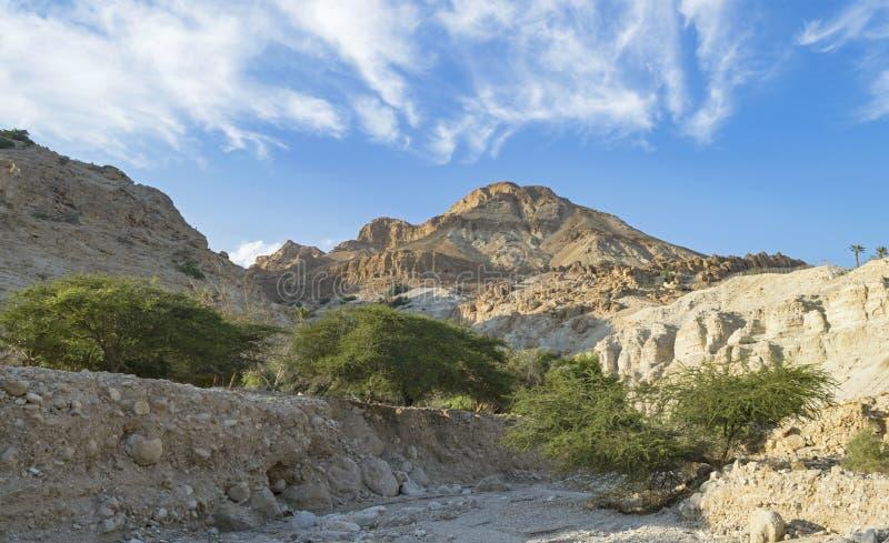 Wadi David Dry Stream nahe dem Ufer des Toten Meers stockfotografie