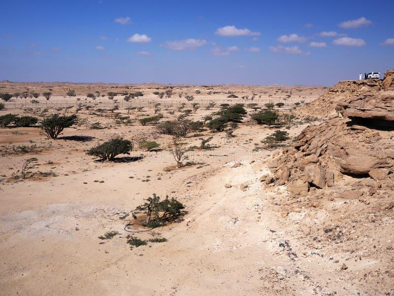 Wadi Dawkah, región de Dhofar, Omán fotografía de archivo libre de regalías