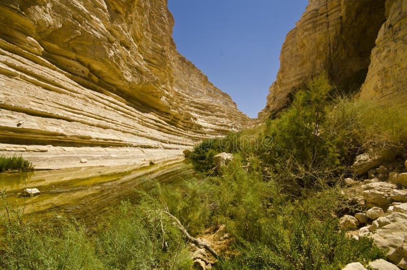 Wadi Ein Avdat Negev, Israel royaltyfria bilder