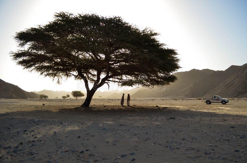 Wadi el Gemal immagini stock libere da diritti