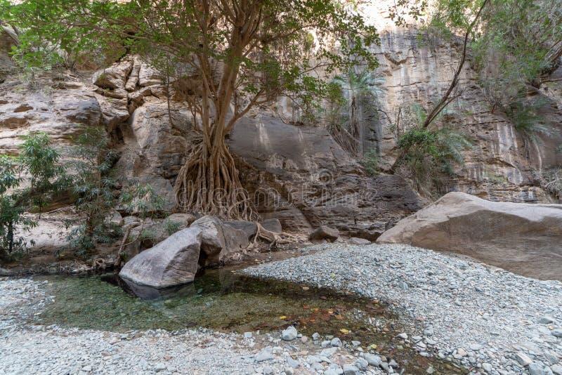 Wadi Lajab w Jizan prowincji, Arabia Saudyjska zdjęcia stock