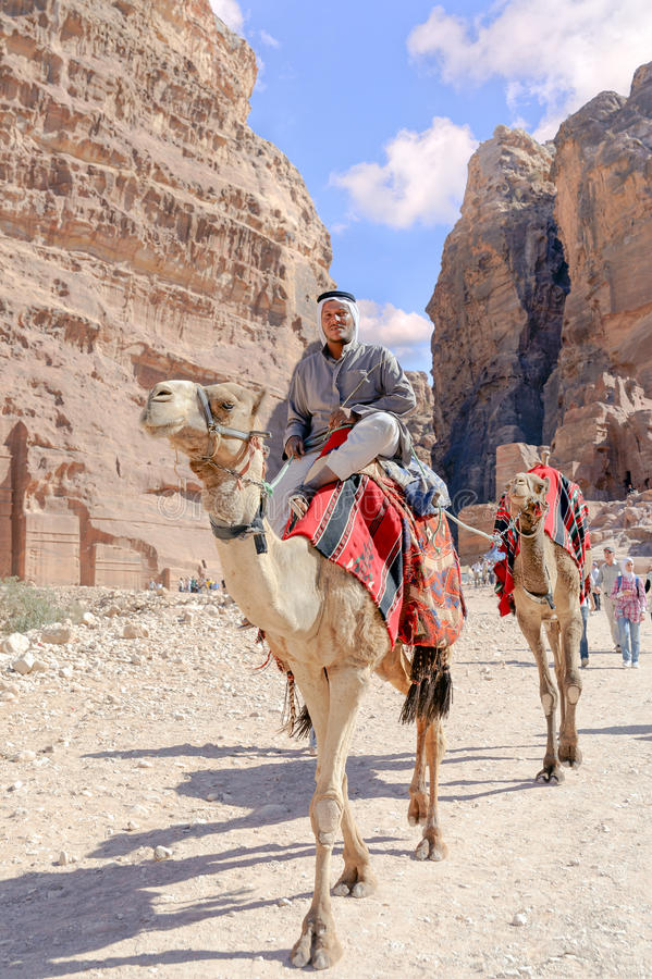 WADI MUSA, JORDAN - NOVEMBER 18, 2012: Camels for rent and arab lessee at ancient Petra city.Petra is historical and archaeologic royalty free stock image