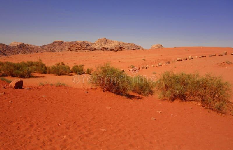 Wadi Rum Desert royaltyfri fotografi