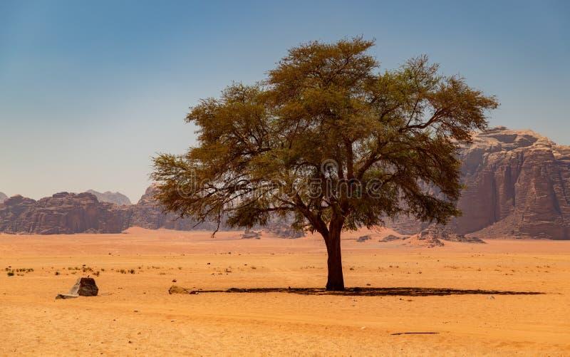 Wadi Rum IV stock fotografie