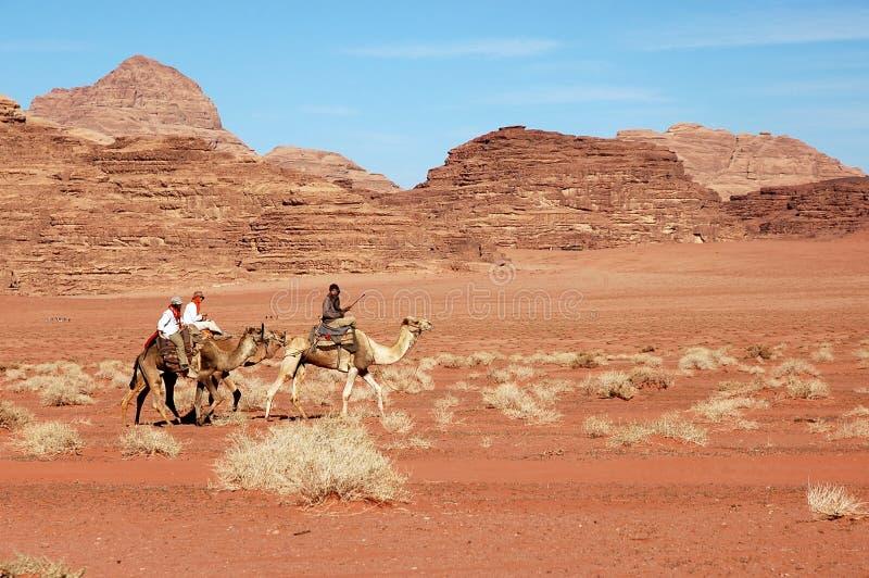 Wadi Rum-kameelsafari, Jordanië stock fotografie