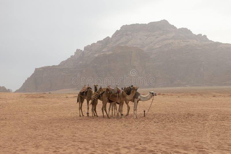 Wadi Run Desert, Jordan Travel, Kamelen, Aard royalty-vrije stock afbeelding