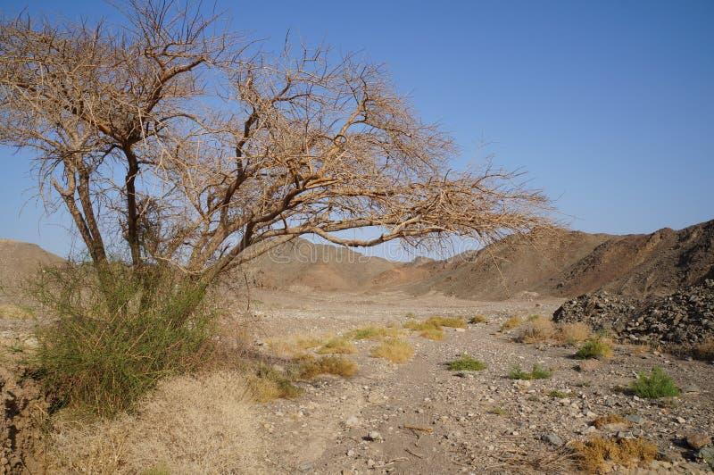 Wadi Shahamon nahe Elat lizenzfreie stockfotografie