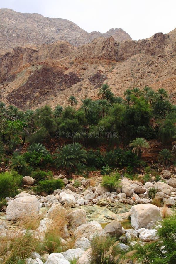 Wadi Tiwi stock afbeelding