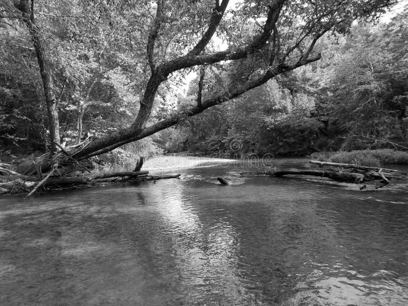 Creek royalty free stock image