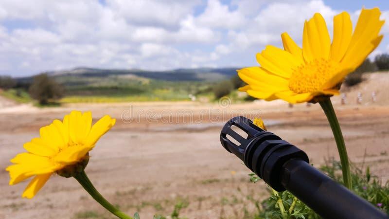 Waffe gegen bunte Blumen, wählend zwischen Frieden oder Krieg Konzept: stoppen Sie Konflikt, glauben Sie der Weltschönheit stockbilder