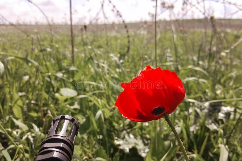 Waffe gegen bunte Blumen, wählend zwischen Frieden oder Krieg Konzept: stoppen Sie Konflikt, glauben Sie der Weltschönheit stockbild