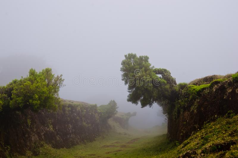 Wafts of mist are laying upon the highland of Madeira. They are coming into a defile and generate a spooky atmospere. Wafts of mist are laying upon the highland royalty free stock photography