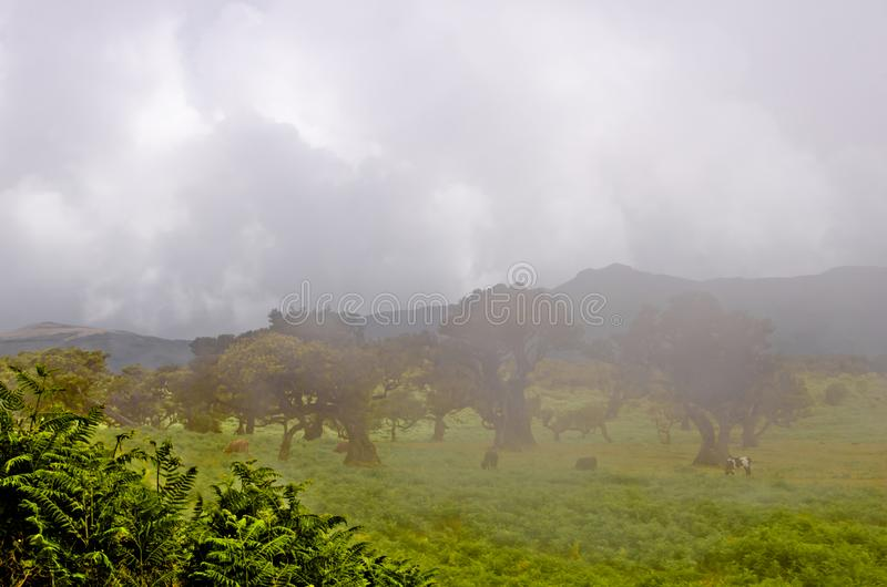 Wafts of mist are laying upon the highland of Madeira and generate a spooky athmosphere. Wafts of mist are laying upon the highland of Madeira and generate a royalty free stock images