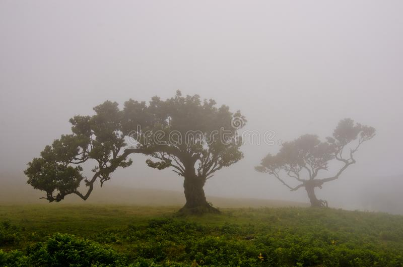 Wafts of mist are laying upon the highland of Madeira and generate a spooky atmospere. Wafts of mist are laying upon the highland of Madeira and generate a stock photos