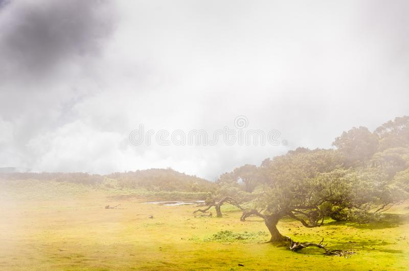 Wafts of mist are laying upon the highland of Madeira and generate a mysterious athmosphere. Wafts of mist are laying upon the highland of Madeira and generate a royalty free stock photo