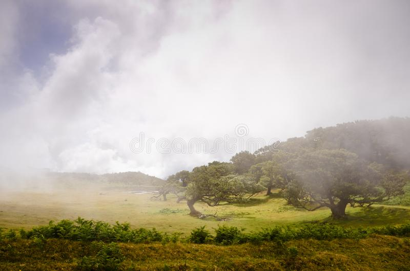 Wafts of mist are laying upon the highland of Madeira and generate a spooky athmosphere. Wafts of mist are laying upon the highland of Madeira and generate a royalty free stock photography