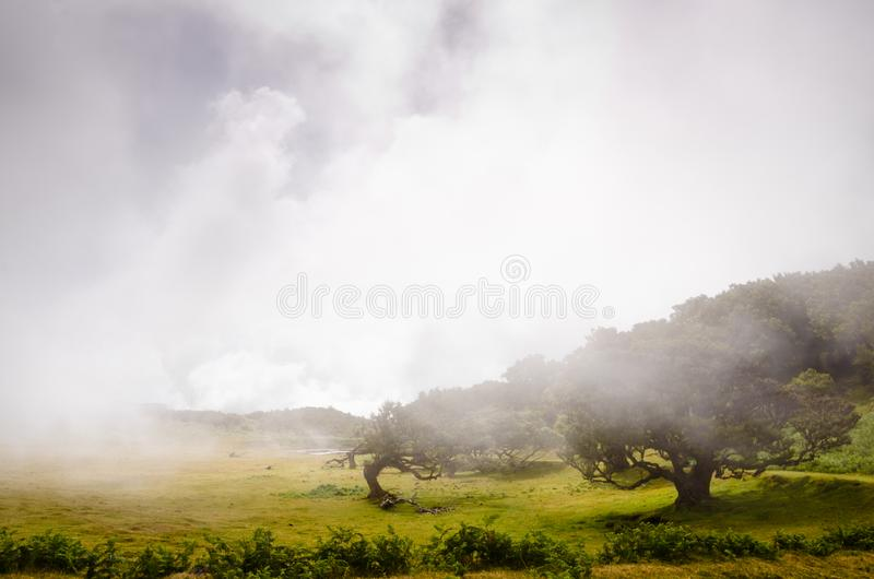 Wafts of mist are laying upon the highland of Madeira and generate a spooky athmosphere. Wafts of mist are laying upon the highland of Madeira and generate a royalty free stock photos