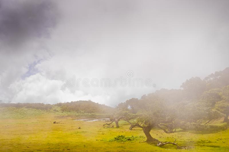 Wafts of mist are laying upon the highland of Madeira and generate a spooky athmosphere. Wafts of mist are laying upon the highland of Madeira and generate a royalty free stock photo