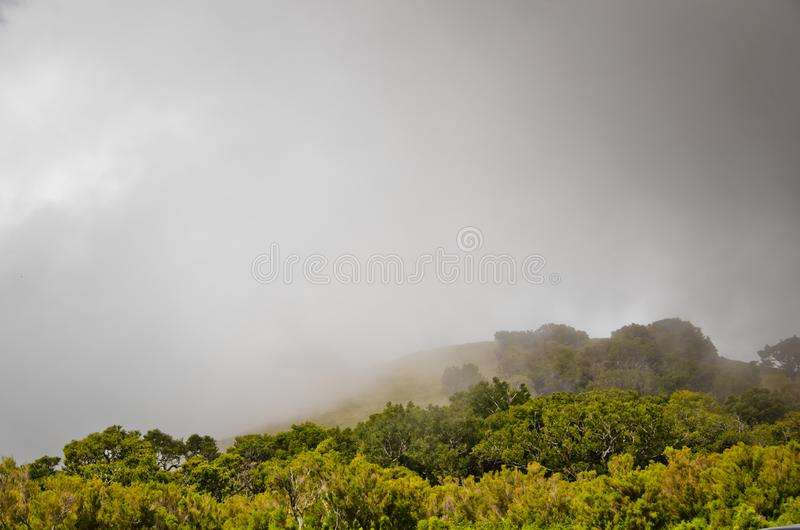 Wafts of mist are laying upon the highland of Madeira and generate a mysterious atmosphere. Wafts of mist are laying upon the highland of Madeira and generate a stock photos