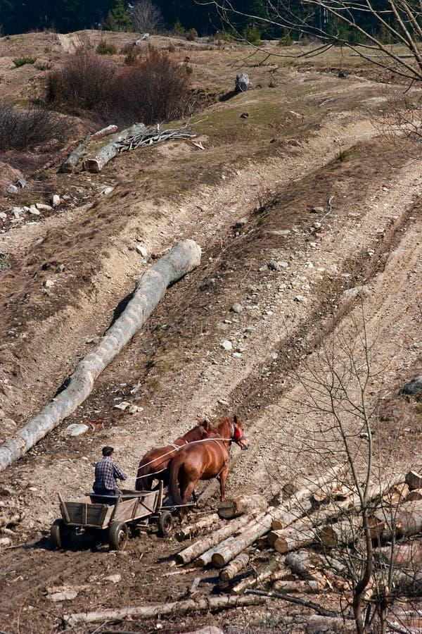 Wagen met paarden royalty-vrije stock fotografie