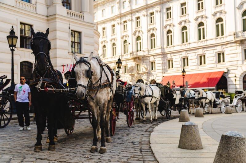 Wagen mit den Pferden, die auf Touristen nahe bei Palast in Wien warten lizenzfreie stockfotos