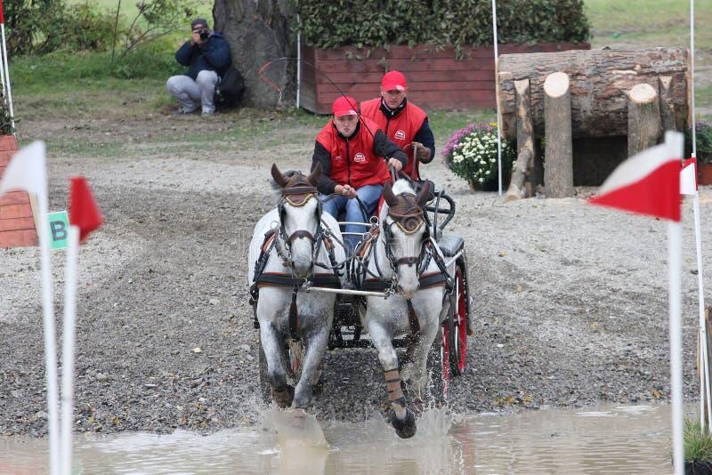 Wagen mit zwei Pferden lizenzfreies stockbild