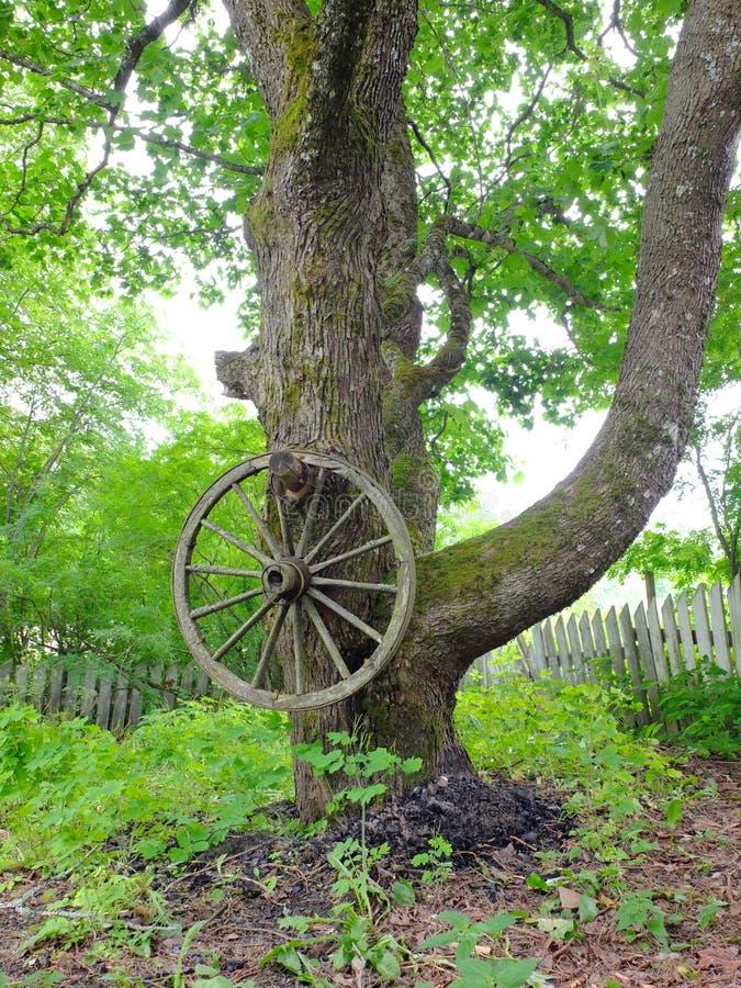 Wagenrad, das von einem Baum hängt stockfotos