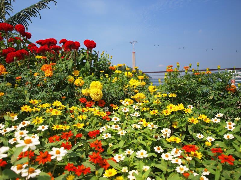 wagon kolei linowej kwiaty fotografia stock