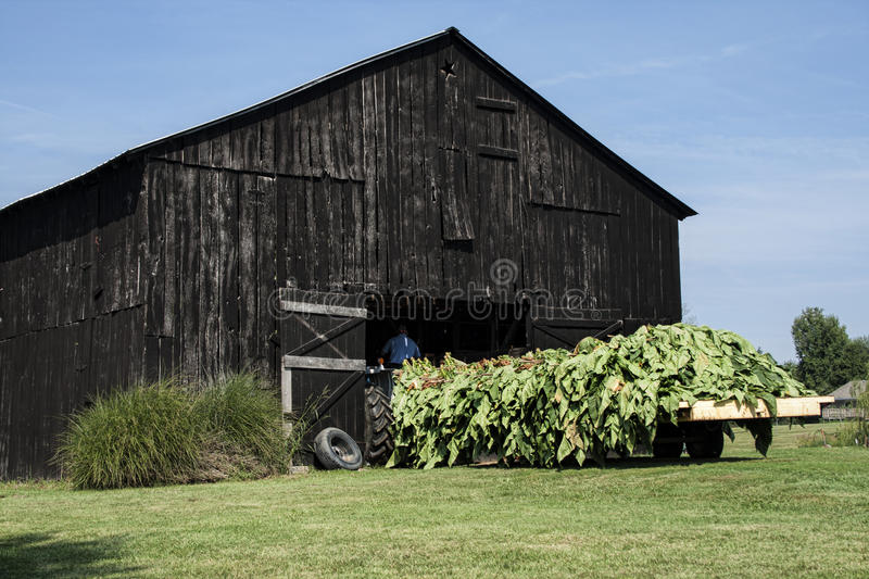 Download Wagon Load Of Tobacco Stock Photo - Image: 83708993