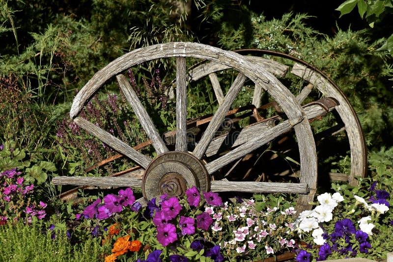 Download Wagon Wheels In Flower Garden Stock Photo   Image Of Wood,  Frontier: 95119582