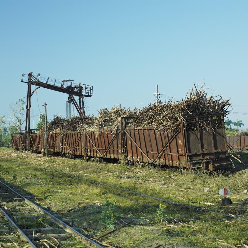 Wagons full of sugar cane. In sugar railway of Niquero, Cuba stock photography