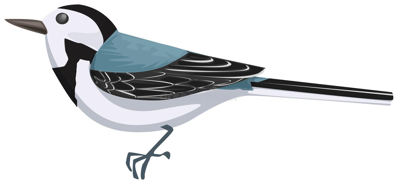 wagtail vektor illustrationer