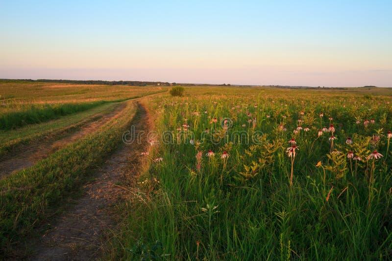 Wah ` Kon-Tah与紫色Coneflowers的大草原路 免版税库存照片