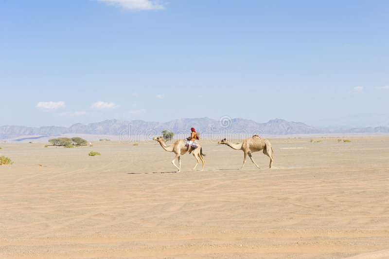 Download Wahiba Desert Oman stock photo. Image of terrain, dune - 7475320