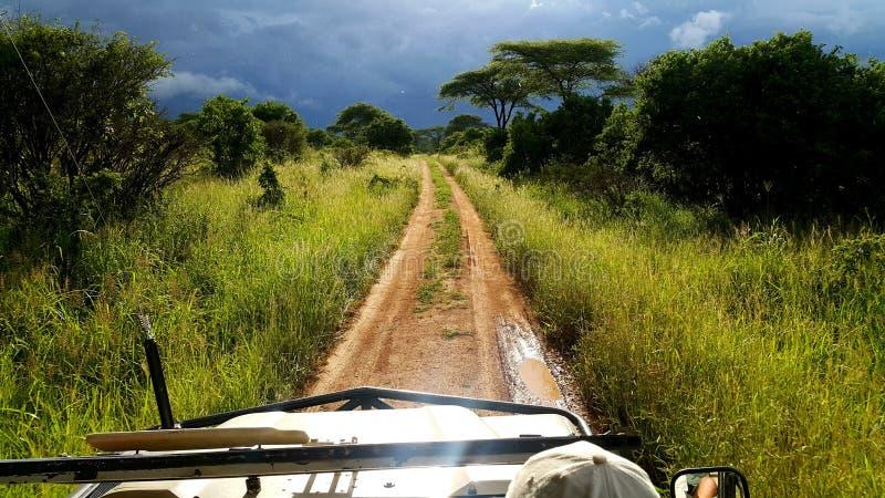 Wahre Safari in der tansanischen Wildnis lizenzfreies stockbild