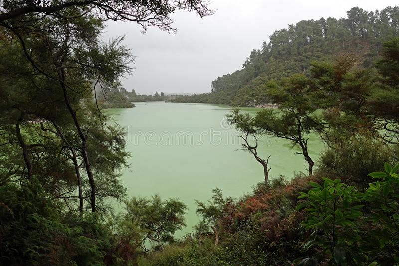 Wai-O-Tapu sjö Ngakoro i Rotorua, Nya Zeeland arkivbilder