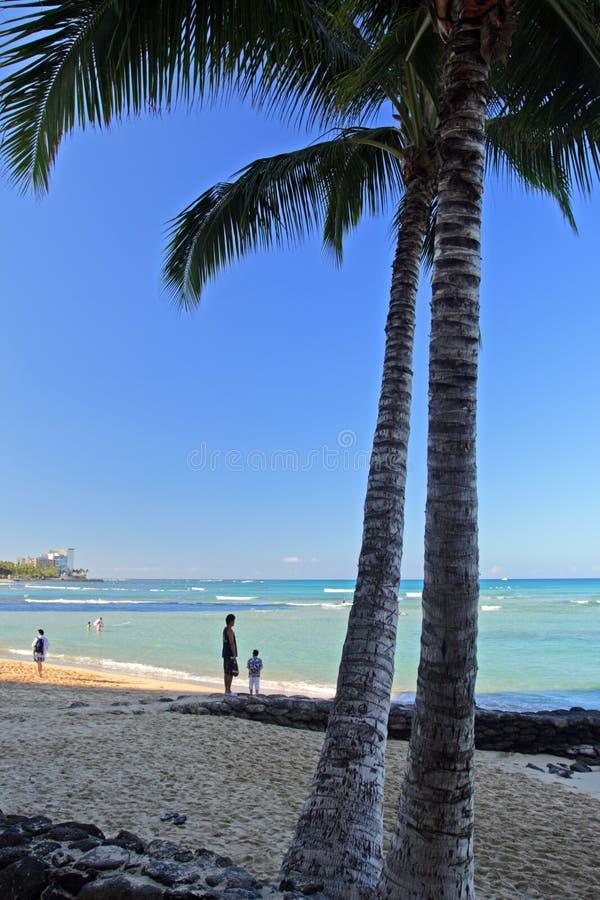 waikiki Гавайских островов honolulu oahu пляжа стоковые изображения rf