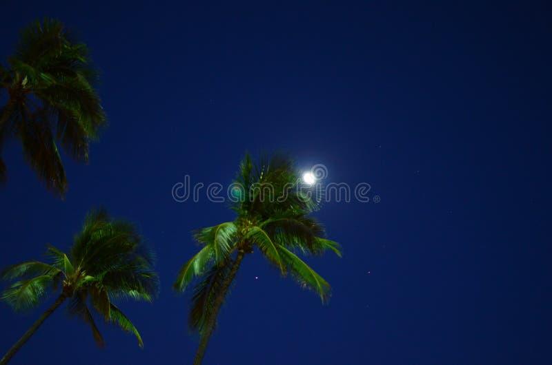Waikiki Beach Moonlight Palm tree stock photography