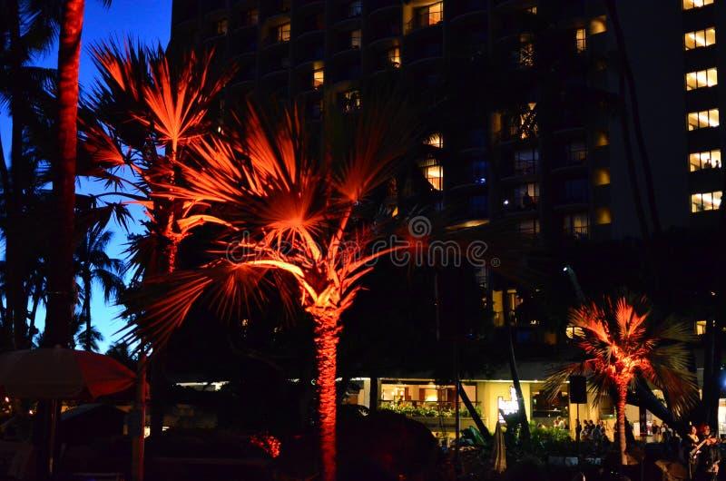 Waikiki Beach Palm Tree Silhouette stock images