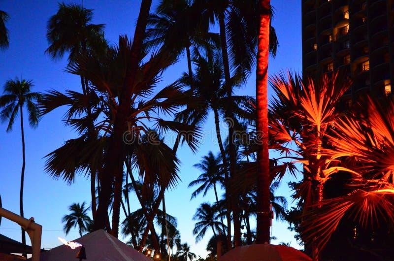 Waikiki Beach Palm Tree Silhouette royalty free stock photo