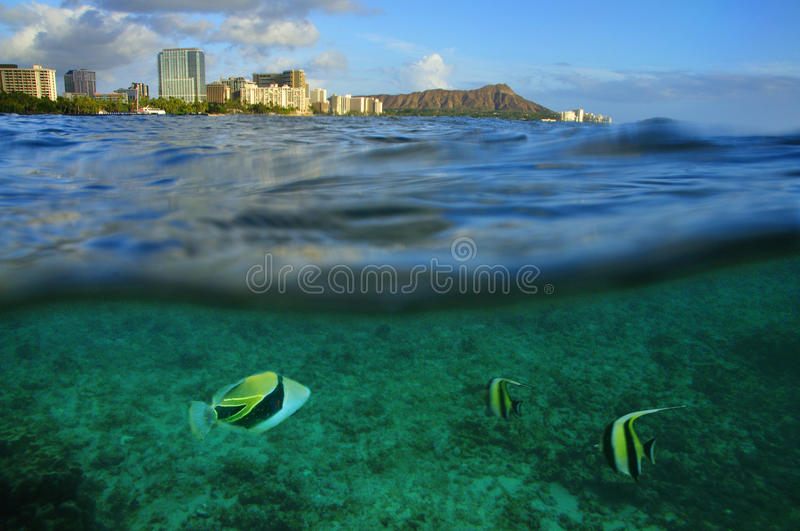 Waikiki, Oahu, Hawaï photographie stock libre de droits